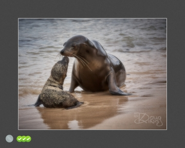 Sea Lion Pup Greets Mother