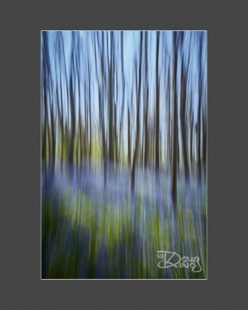 The Scent of Bluebell