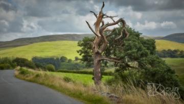 Storm Damaged Tree