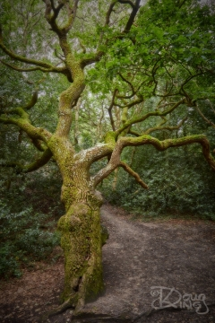 Tree by Path